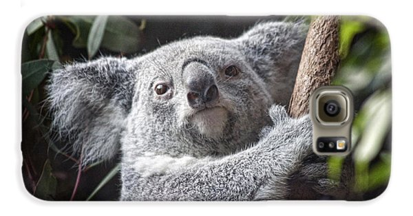 Koala Bear Galaxy S6 Case by Tom Mc Nemar