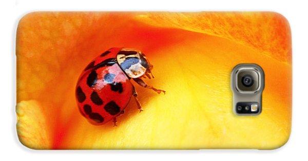 Ladybug Galaxy S6 Case
