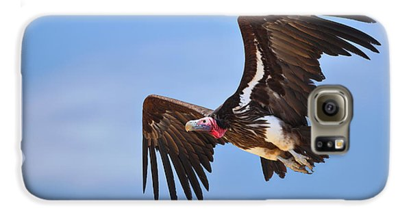 Lappetfaced Vulture Galaxy S6 Case by Johan Swanepoel