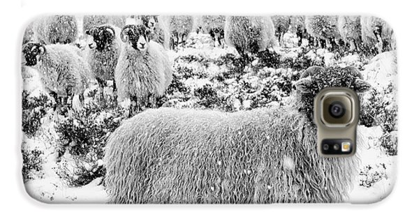 Sheep Galaxy S6 Case - Leader Of The Flock by Janet Burdon