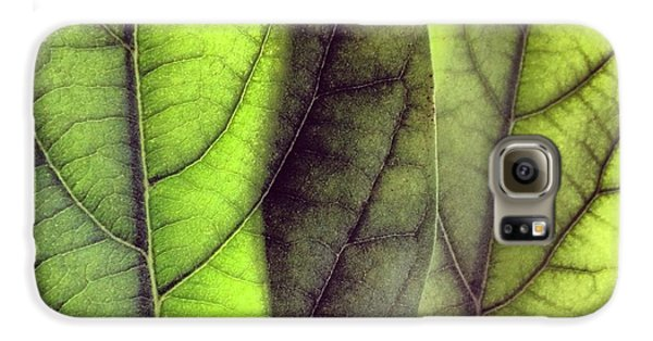 Green Galaxy S6 Case - Leaf Abstract by Christy Beckwith