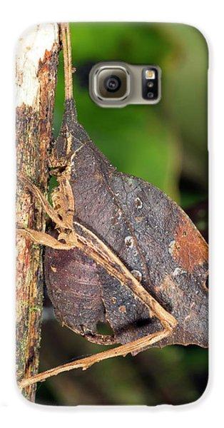 Leaf Mimic Katydid Galaxy S6 Case by Dr Morley Read