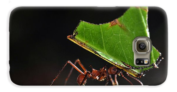 Leafcutter Ant Galaxy S6 Case