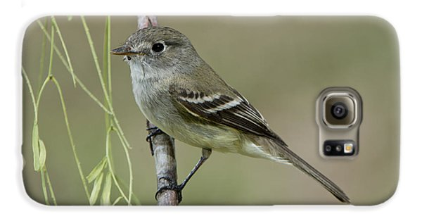 Least Flycatcher Galaxy S6 Case