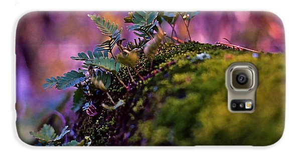 Leaves On A Log Galaxy S6 Case