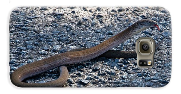 Galaxy S6 Case featuring the photograph Legless Lizard Or A Snake ? by Miroslava Jurcik