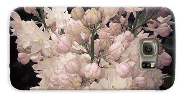 Beautiful Galaxy S6 Case - Lilacs Are Blooming by Christy Beckwith