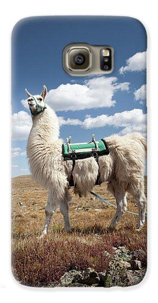 Llama Galaxy S6 Case - Llama Portrait by Ryan Heffernan