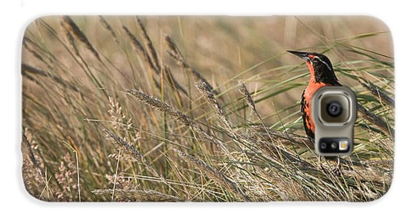 Long-tailed Meadowlark Galaxy S6 Case by John Shaw