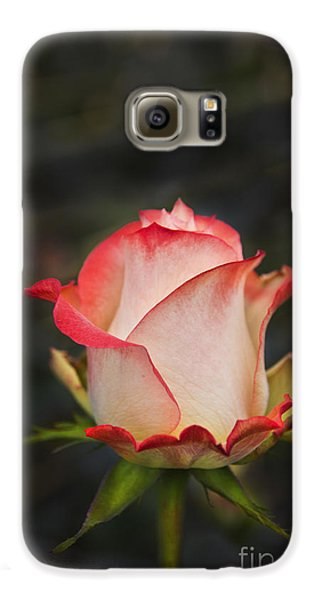 Love Is A Rose II Galaxy S6 Case by Al Bourassa