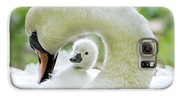 Swan Galaxy S6 Case - Love Surrounds by Jacky Parker