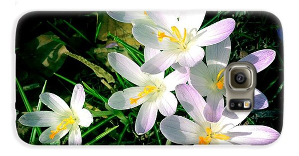 Bright Galaxy S6 Case - Lovely Flowers In Spring by Matthias Hauser