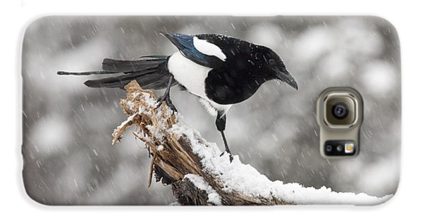Magpie Out On A Branch Galaxy S6 Case by Tim Grams