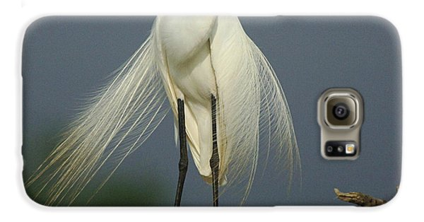 Majestic Great Egret Galaxy S6 Case by Bob Christopher