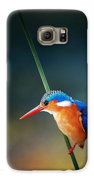 Colours Galaxy S6 Case - Malachite Kingfisher by Johan Swanepoel