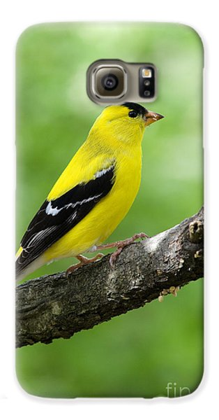 Male American Goldfinch Galaxy S6 Case