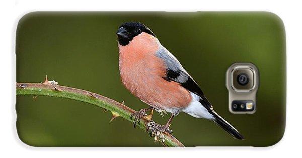 Finch Galaxy S6 Case - Male Eurasian Bullfinch by Colin Varndell