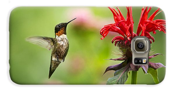 Male Ruby-throated Hummingbird Hovering Near Flowers Galaxy S6 Case