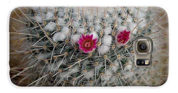 Mammillaria Geminispina Galaxy S6 Case