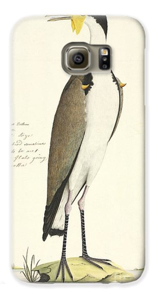Masked Lapwing, 18th Century Galaxy S6 Case by Natural History Museum, London