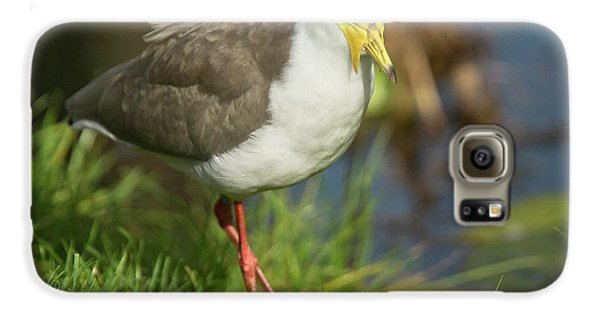 Masked Lapwing Galaxy S6 Case by Bob Gibbons