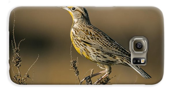 Meadowlark On Weed Galaxy S6 Case by Robert Frederick