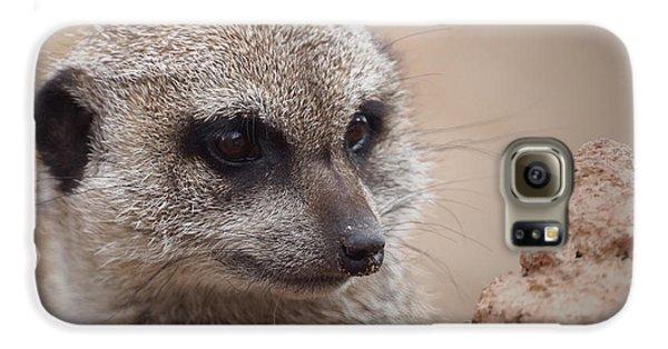 Meerkat 7 Galaxy S6 Case by Ernie Echols