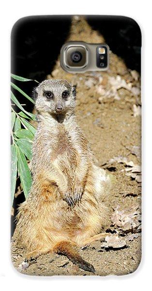 Meerkat Galaxy S6 Case - Meerkat by Heiti Paves