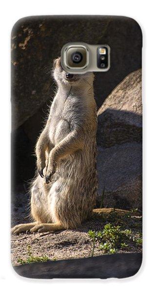 Meerkat Looking Forward Galaxy S6 Case by Chris Flees