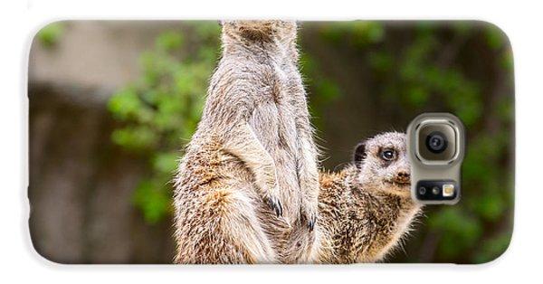 Meerkat Pair Galaxy S6 Case by Jamie Pham