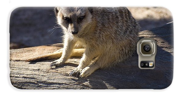 Meerkat Resting On A Rock Galaxy S6 Case by Chris Flees