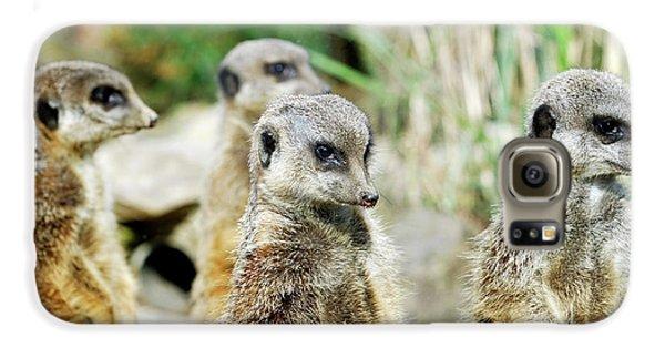 Meerkat Galaxy S6 Case - Meerkats by Heiti Paves