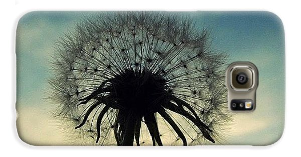 Sky Galaxy S6 Case - #mgmarts #dandelion #weed #sunset #sun by Marianna Mills