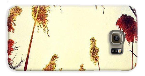 Sunny Galaxy S6 Case - #mgmarts #sunset #bright #beautiful by Marianna Mills