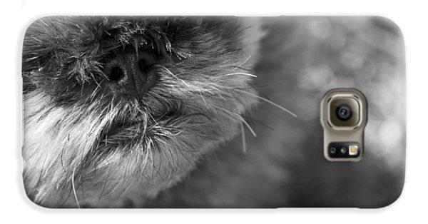 Griffon Galaxy S6 Case - Moby by Matthew Blum