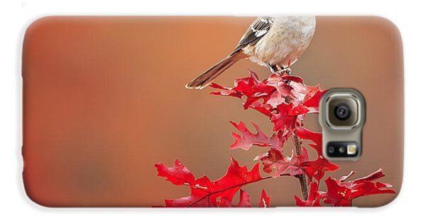 Mockingbird Autumn Square Galaxy S6 Case by Bill Wakeley