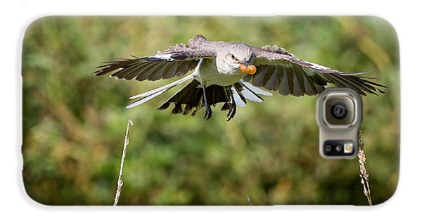 Mockingbird In Flight Galaxy S6 Case by Bill Wakeley