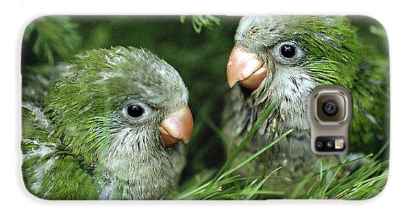 Monk Parakeet Chicks Galaxy S6 Case