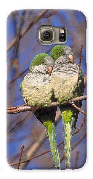 Monk Parakeets Galaxy S6 Case