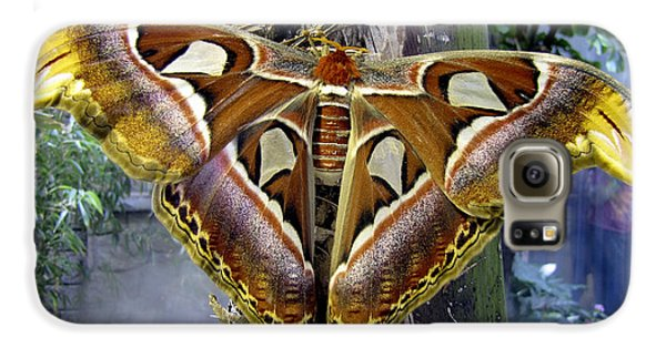 Atlas Moth Galaxy S6 Case