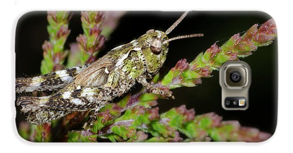 Mottled Grasshopper Juvenile Galaxy S6 Case by Nigel Downer