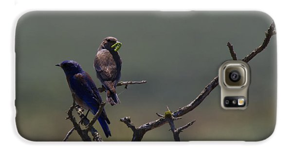 Mountain Bluebird Pair Galaxy S6 Case by Mike  Dawson