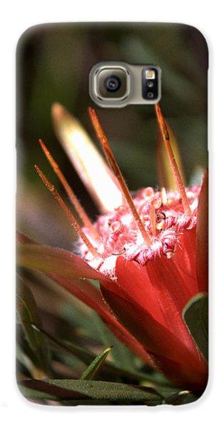 Galaxy S6 Case featuring the photograph Mountain Devil by Miroslava Jurcik