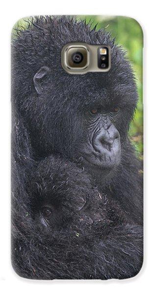 Gorilla Galaxy S6 Case - Mountain Gorilla, Gorilla Beringei by Tom Murphy