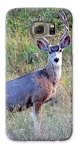 Galaxy S6 Case featuring the photograph Mule Deer Buck by Karen Shackles