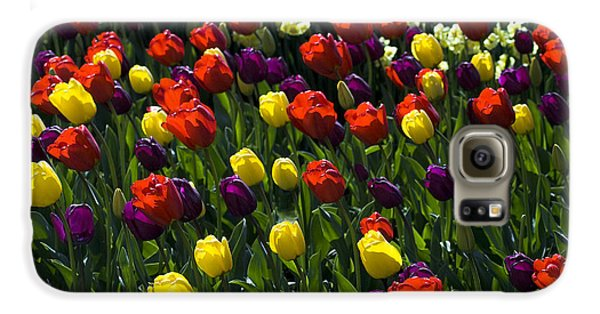Galaxy S6 Case featuring the photograph Multicolored Tulips At Tulip Festival. by Yulia Kazansky