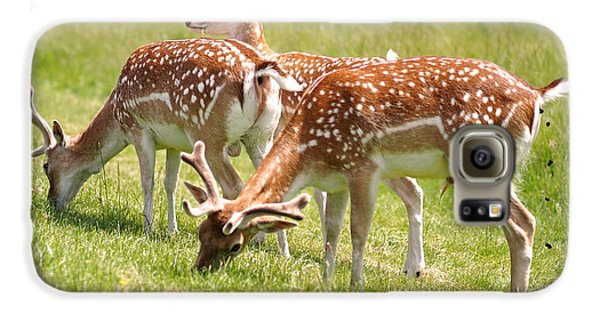 Multitasking Deer In Richmond Park Galaxy S6 Case