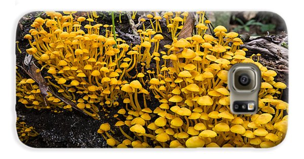 Mushrooms On Tree Trunk Panguana Nature Galaxy S6 Case by Konrad Wothe