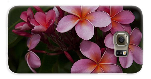 Na Lei Pua Melia O Wailua - Pink Tropical Plumeria Hawaii Galaxy S6 Case