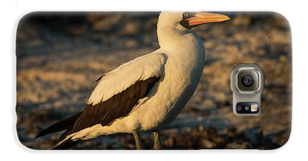 Boobies Galaxy S6 Case - Nazca Booby (sula Granti by Pete Oxford